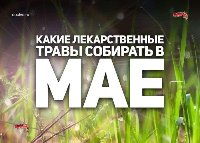 Лекарственные травы которые нужно собирать в мае