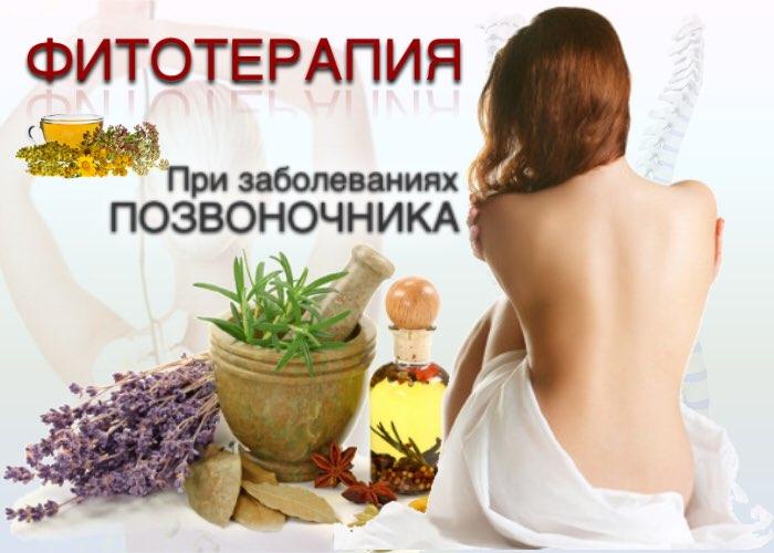 фитотерапия при заболеваниях позвоночника