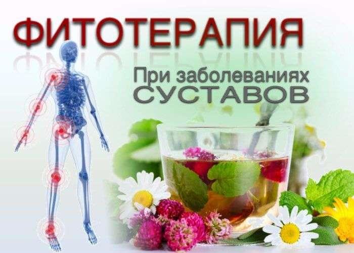 фитотерапия суставов