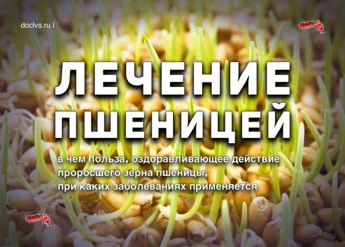 пшеницей лечение
