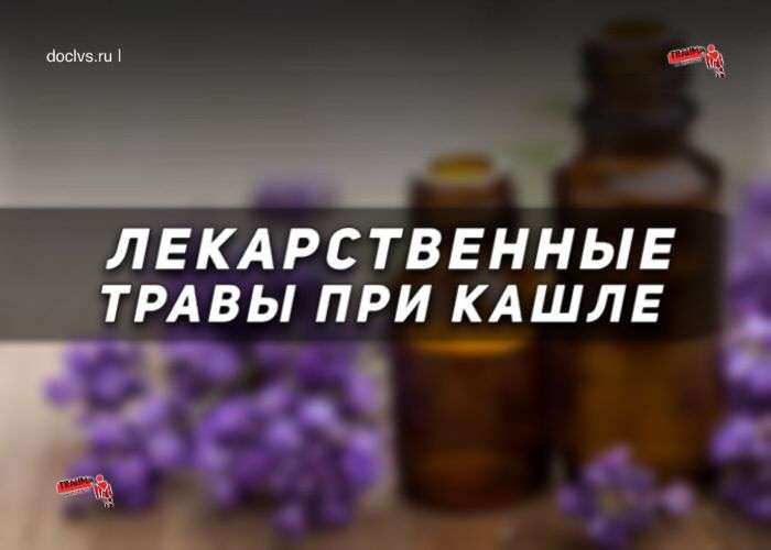 Кашель: лечение лекарственными травами