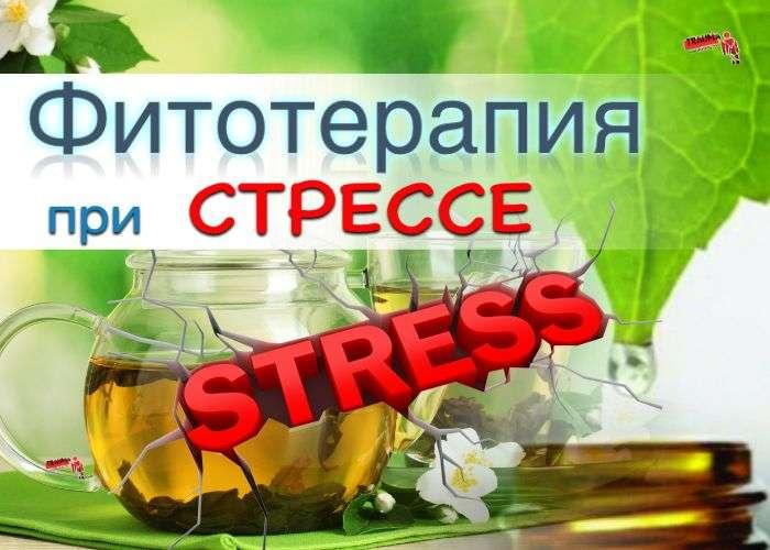 фитотерапия при стрессе