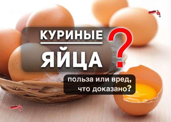 Куриные яйца: польза или вред, что доказано?