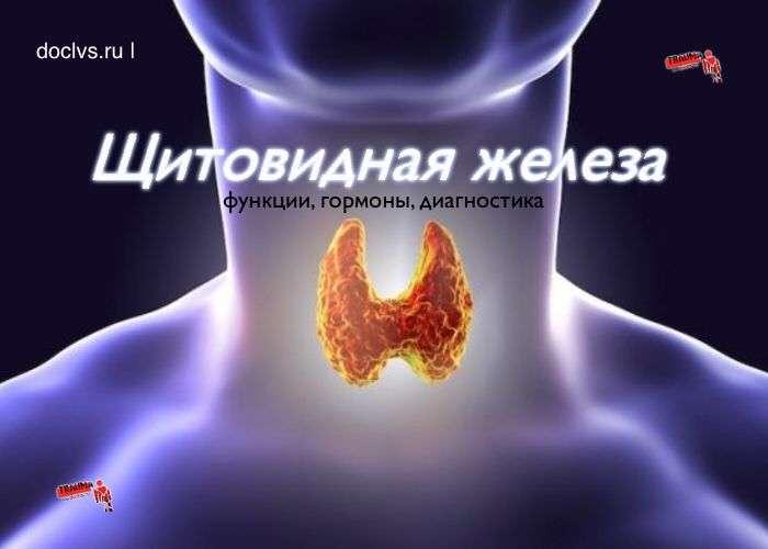 Щитовидная железа: зачем нужна, функции и гормоны щитовидной железы, к чему приводит дисбаланс гормонов щитовидной железы