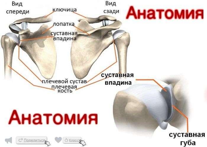 Вывих плечевого сустава как лечить в домашних условиях